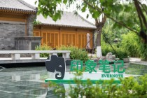 把大象带到中国,一共需要几步?