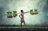 AI让农业变天?